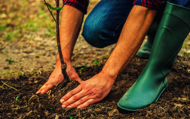 Closeup Photo of man planting tree