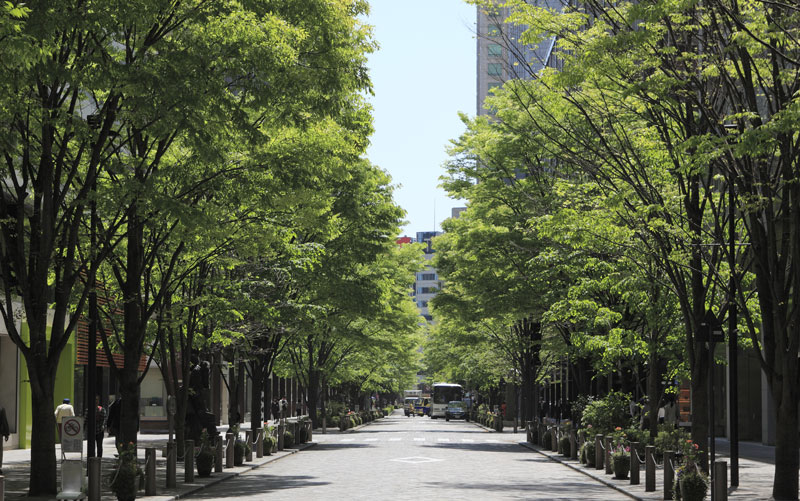 Photo of tree lined urban street